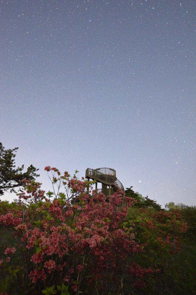 神野山山頂展望台とつつじ